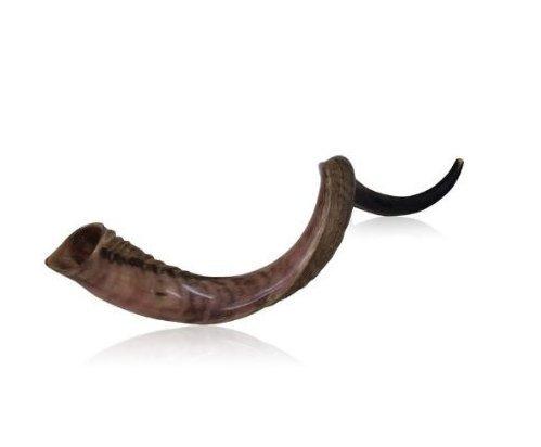 Best Hunting Horns